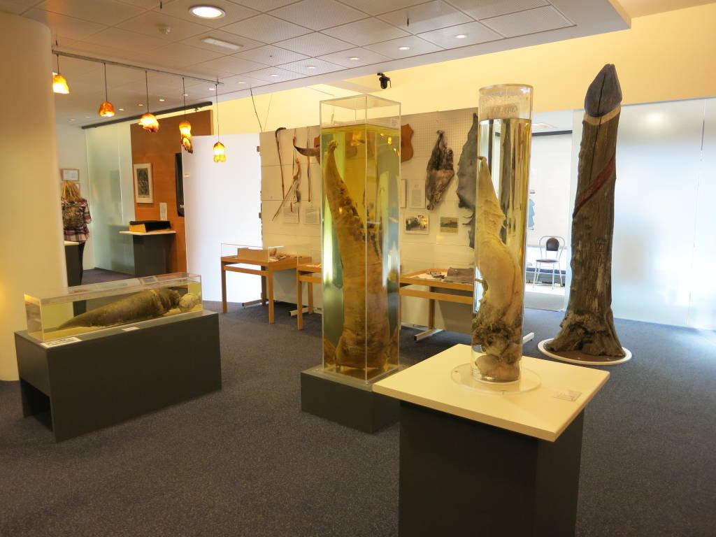 Icelandic Phallological Museum